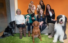 Pets Custody Law Buckinghamshire and Oxfordshire